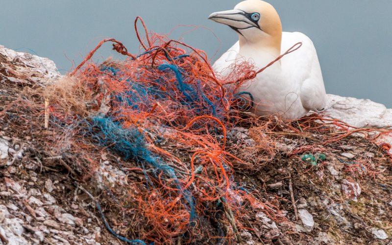 Less waste. Ptak i sieci rybackie.