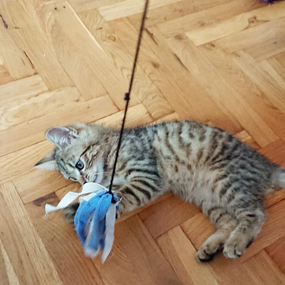 Przerobiona wędka dla kota.  Drugi tydzień wyzwania #dwaR